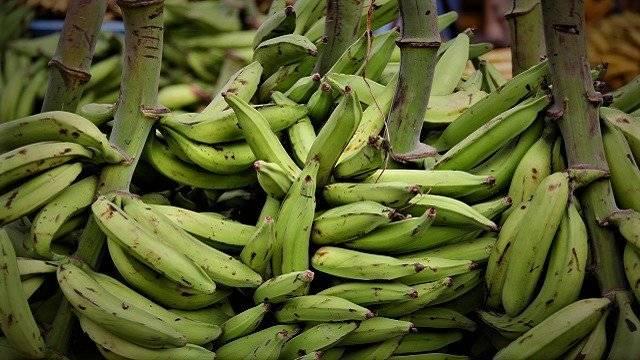 Amazonian-plantains-640