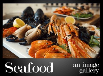 The Mexico City Seafood Gallery